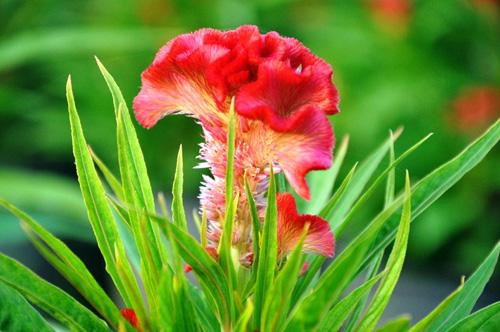 Hoa Tết không kết nụ, chủ vườn ở Sài Gòn khóc ròng - 14