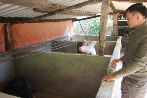 Chuồng lợn 15-20 con, bổ sung chất tươi cho học sinh vùng biên.