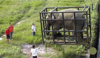 Trung Quốc mua gom hết voi từ Lào