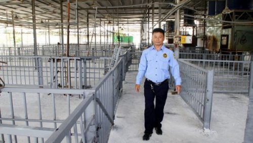 Lắp đặt 40 camera giám sát tại lò mổ Xuyên Á - Ảnh 5.