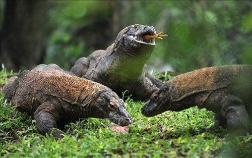 Indonesia bán vé trực tuyến đến đảo rồng Komodo từ năm 2020 - Ảnh 1.