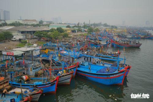 Đà Nẵng cho phép thí điểm khai thác xuất khẩu cá nóc - Ảnh 1.