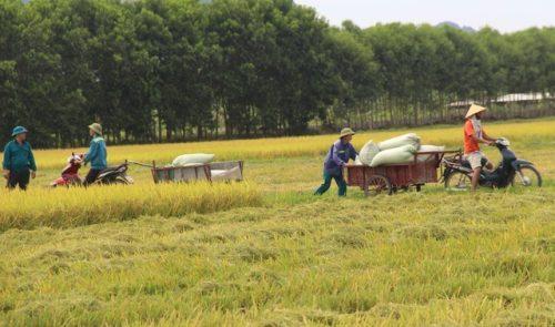 9X bỏ việc an nhàn về quê chế biến gạo, thu trăm tỷ đồng mỗi năm