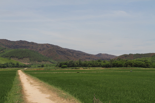 Nghệ An: Khởi tố, bắt tạm giam 4 tháng nguyên lãnh đạo Ban Quản lý rừng phòng hộ huyện Qùy Hợp - Ảnh 1.