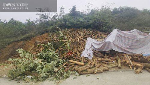 Cận cảnh hiện trường vụ xe tải chở keo đâm vào taluy khiến 7 người chết tại Thanh Hóa - Ảnh 4.