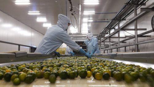 Chi phí logistics cao, nông sản Việt Nam khó cạnh tranh - Ảnh 2.