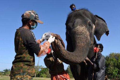Ấn Độ: nơi xét nghiệm 28 con voi, nơi xét nghiệm 21 con hổ - Ảnh 1.