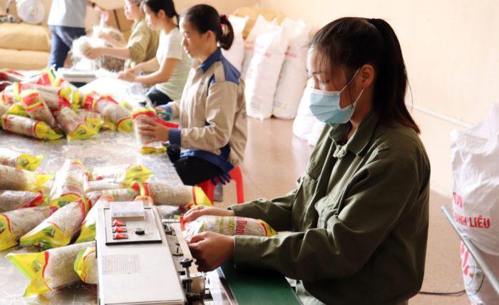 Công nhân Công ty CP Thương mại và Dịch vụ Bình Liêu đóng gói sản phẩm miến dong Bình Liêu.