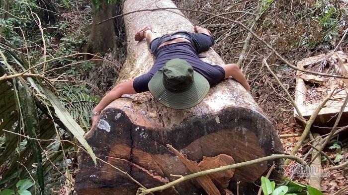 Rừng cổ thụ A Lưới bị 'xẻ thịt': Nghiêm trọng, tức tốc lập đoàn kiểm tra