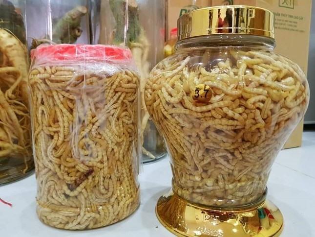 Loại sâu ở Việt Nam được ví như đông trùng hạ thảo của Trung Quốc, giá đắt nhưng không thiếu người mua vì ông ăn, bà vui - Ảnh 2.